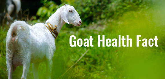 Goat Health Facts